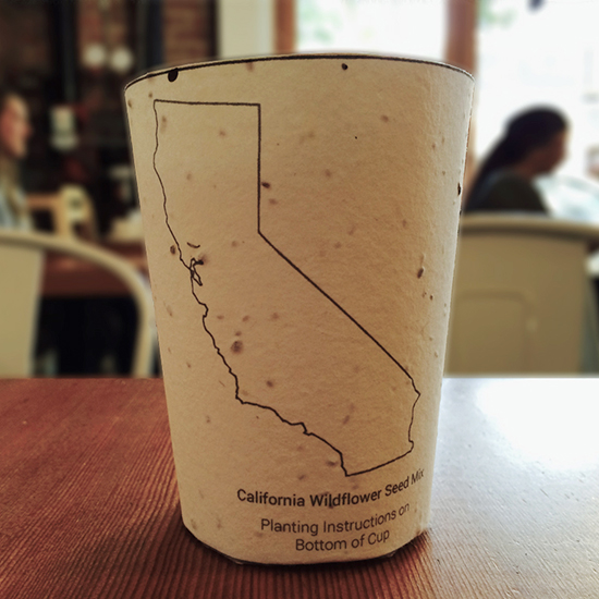 FWX PLANTABLE COFFEE CUP
