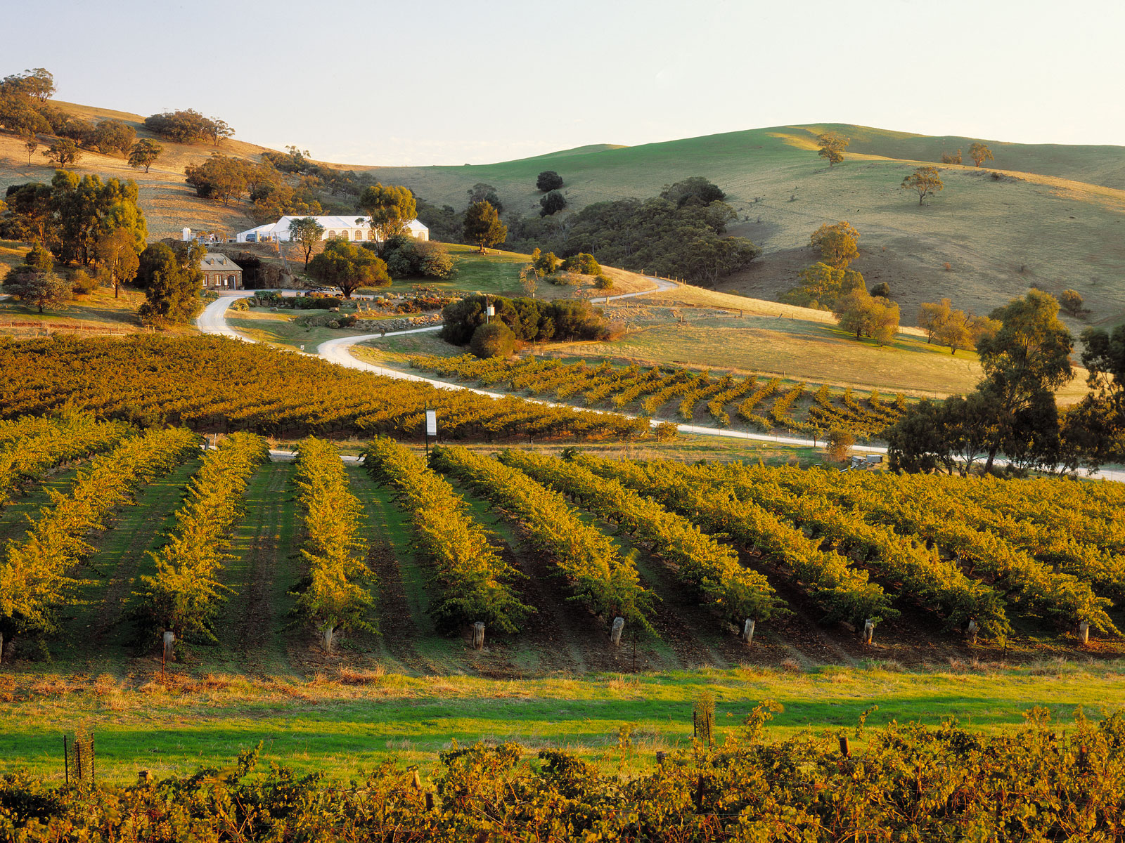 A Wine Guide to Australia's Barossa and Eden Valleys: The Vineyards to Visit and Bottles to Buy