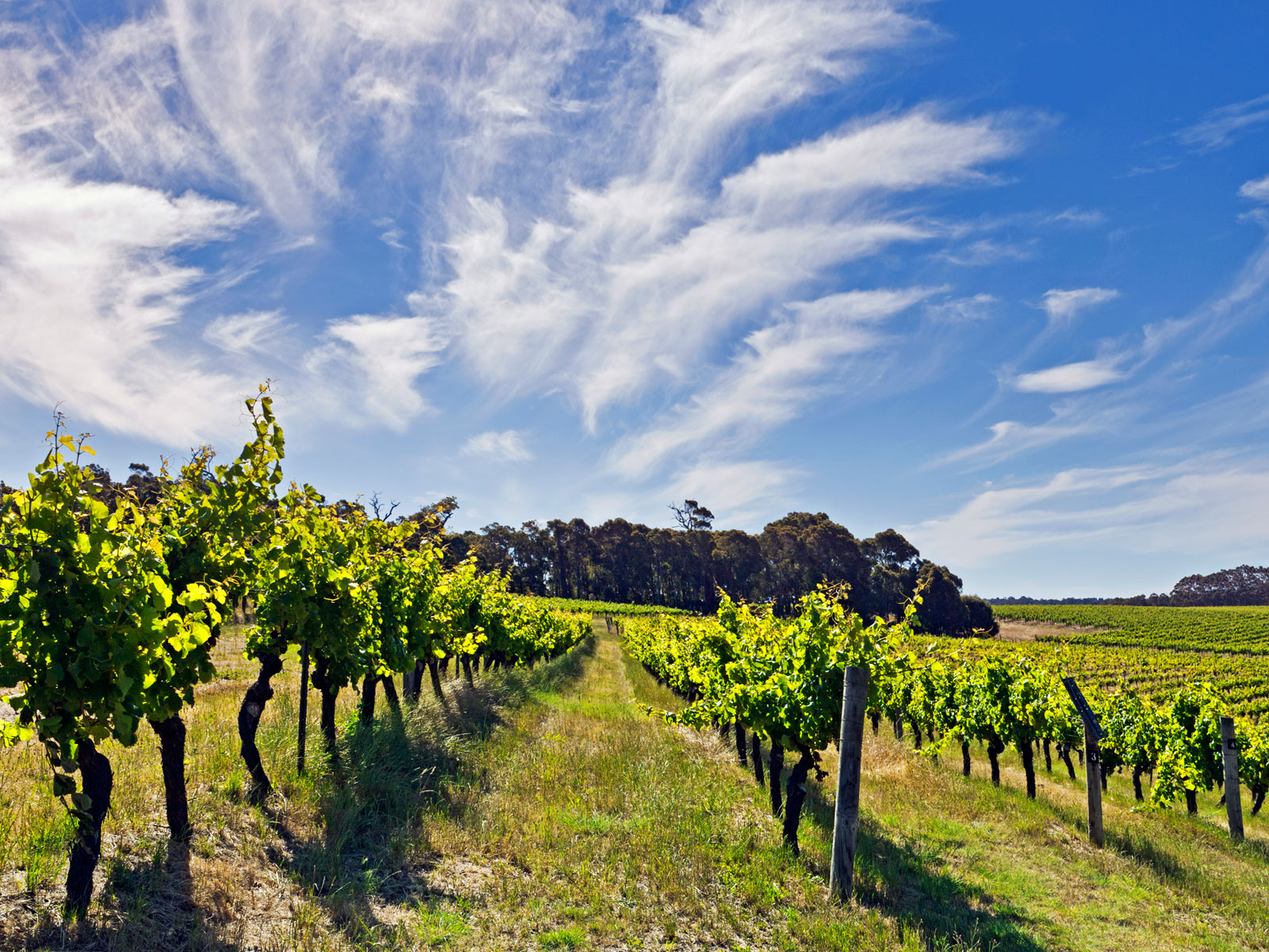 Australia's Margaret River: The Vineyards to Visit and Bottles to Try
