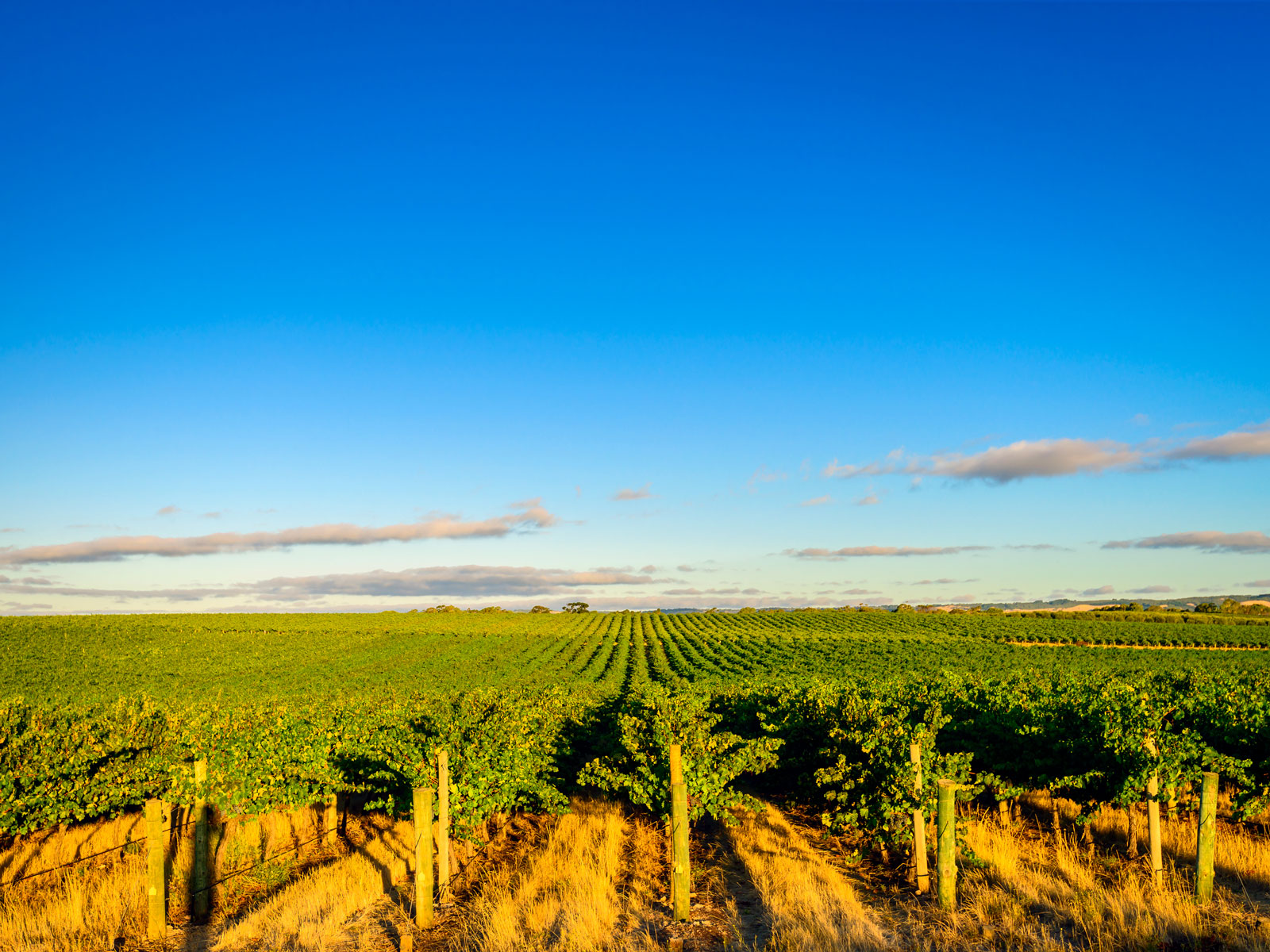 A Guide to Australia's McLaren Vale Wine Region: The Vineyards to Visit and Best Bottles to Try