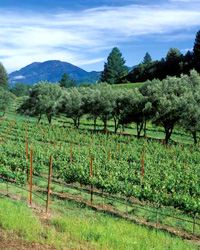 Napa Valley and Sonoma County Wine Region Basics
