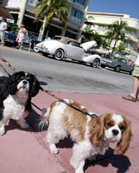 Dog-Friendly: Miami