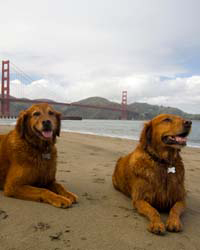 Dog-Friendly: San Francisco