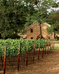 American Wine Awards 2011: Morlet Family Vineyards