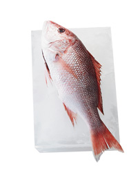 Sustainable Seafood: Red Snapper