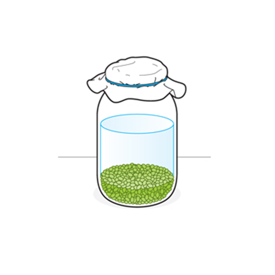 Sprouting: A Step-By-Step Guide