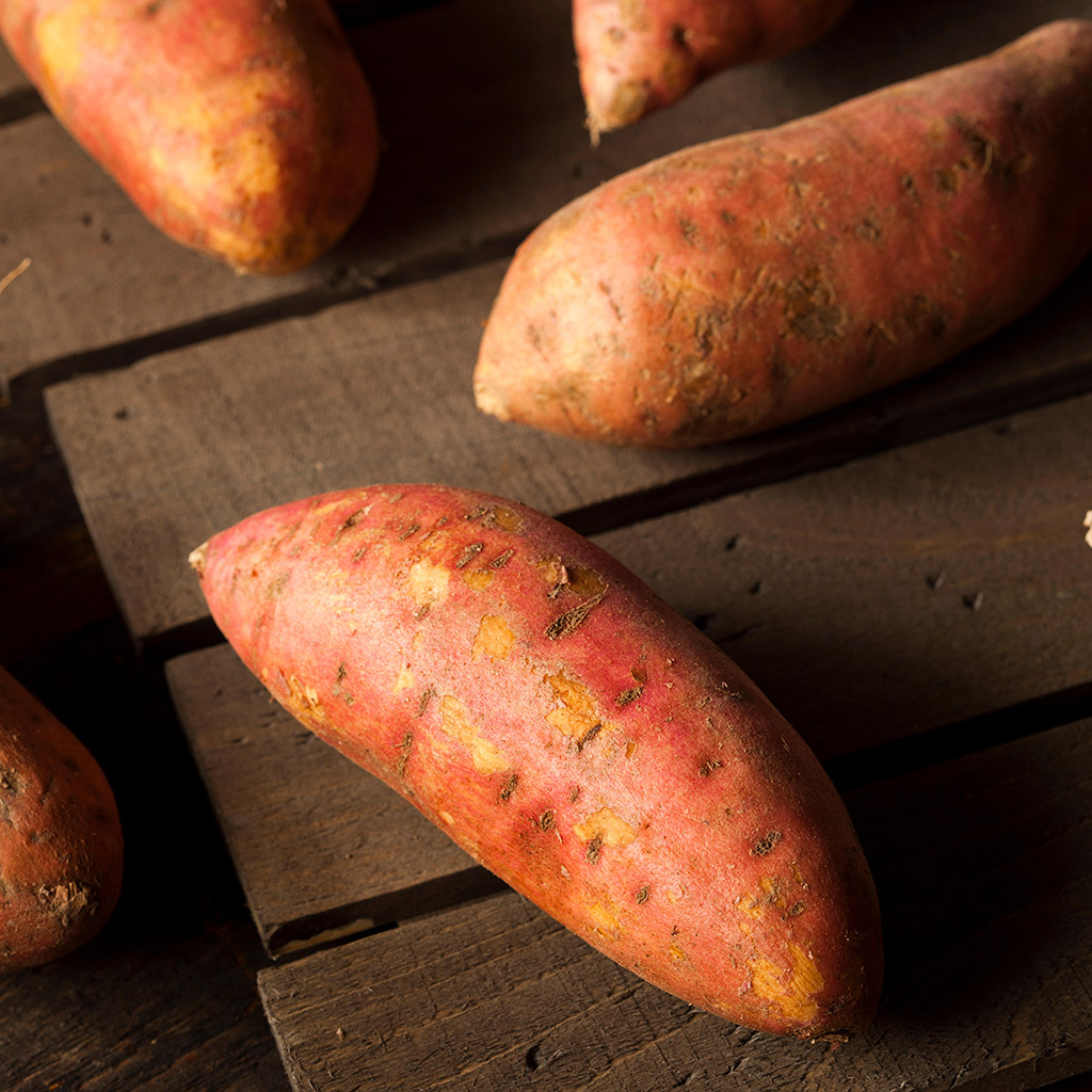 FWX GMO SWEET POTATOES