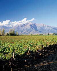 Wine Classics to Try: Chile & Argentina
