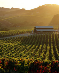 images-sys-201106-a-travel-guide-napa-1.jpg