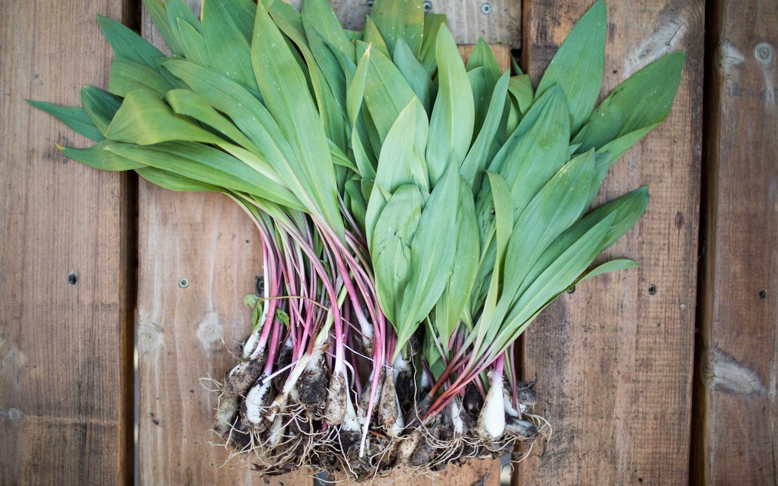 16 Chefs on Their Favorite Ways to Cook Ramps