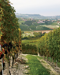 Boroli's Piedmont vineyards produce an exceptional Dolcetto.