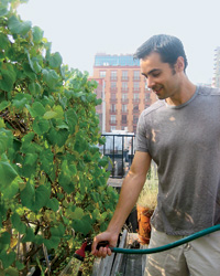 Basis's Bion Bartning grows grapes on his Manhattan roof.
