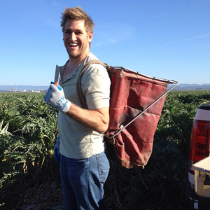 Curtis Stone harvests artichokes.