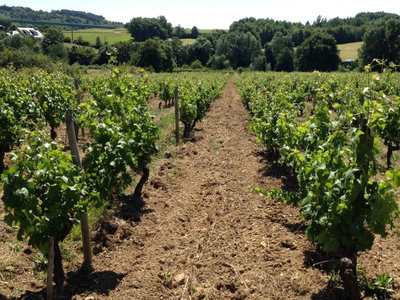 Natural Wines for Naysayers