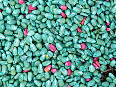 syngenta corn seeds