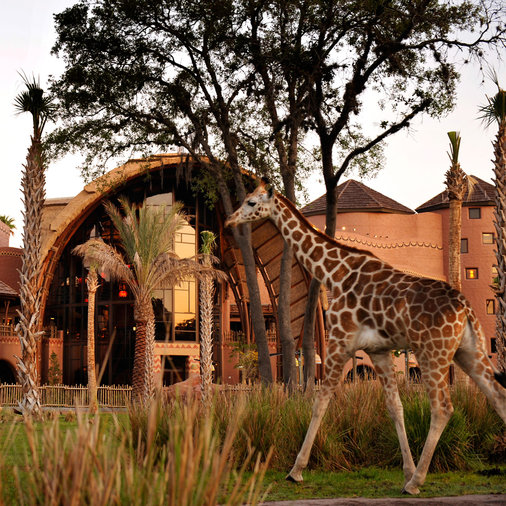 Disney Animal Kingdom Lodge