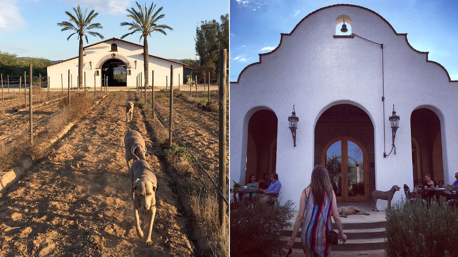 Adobe Guadalupe for a hacienda with Aztec horse stables