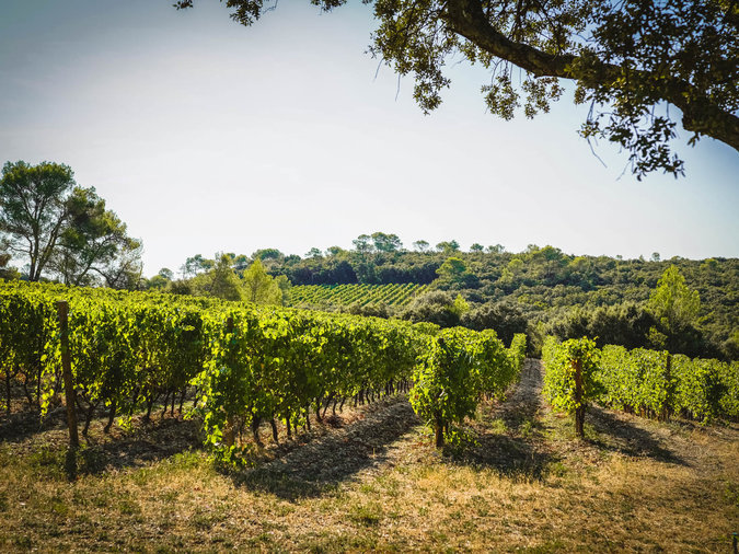 Sustainable Wines and Spirits Languedoc