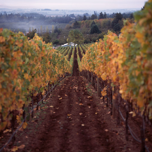 Oregon Wineries