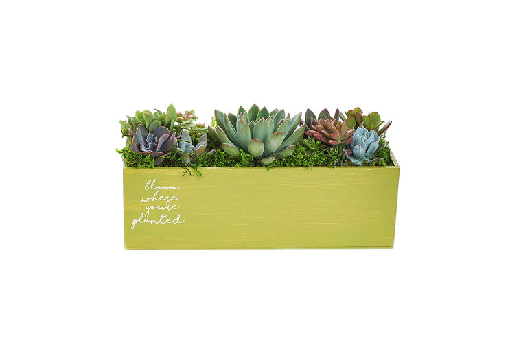 Bloom Where You Are Planted Spring Centerpiece Planter