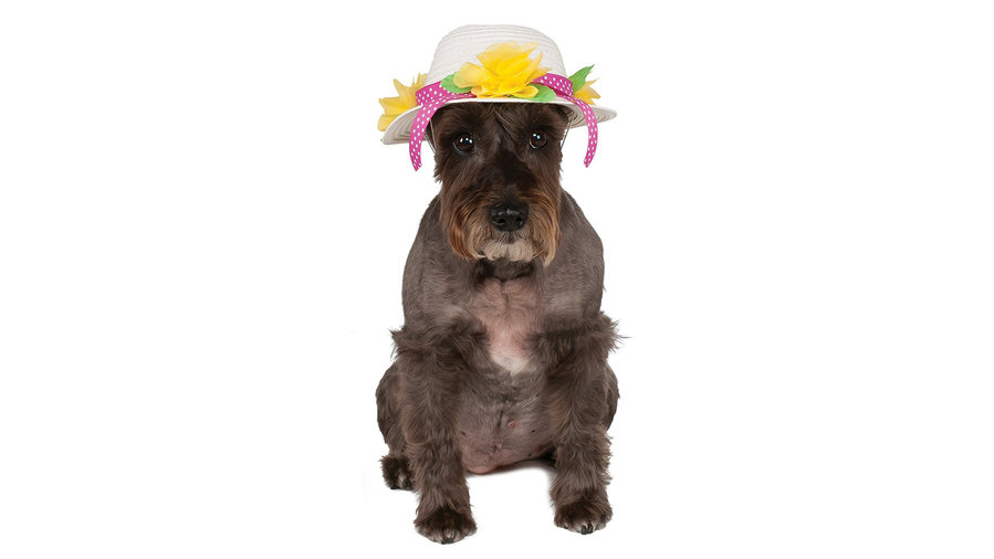 Easter Pet Hat