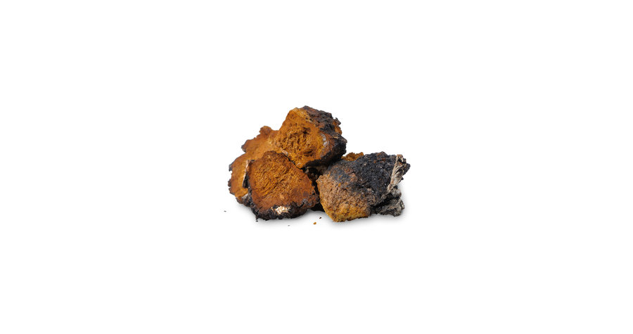 chaga-mushrooms-diet