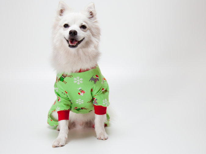 holiday dog pajamas