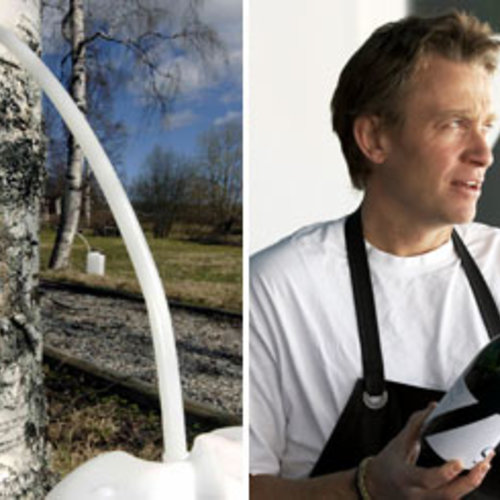 Birch Sap Wine