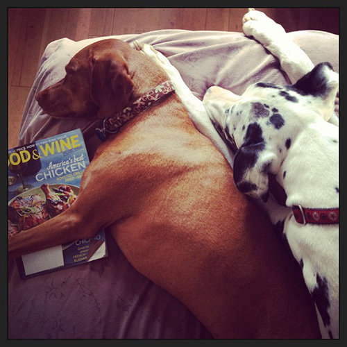 Food & Wine Pets: Maria Hines's dogs