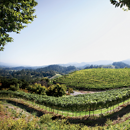 best napa valley wineries to visit hellbach blog