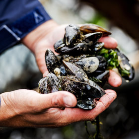 Food & Wine: Are Mussels the New Honeybees?