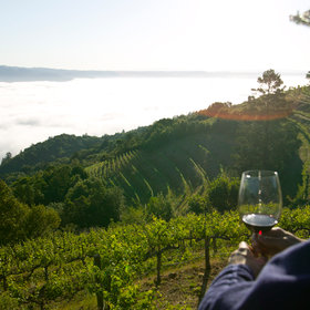 Food & Wine: Napa Valley Dream-Trip Tips