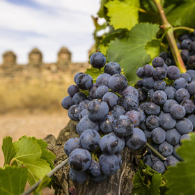 Food & Wine: Great Wines from Catalan Spain