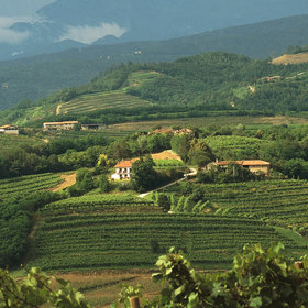 Food & Wine: Friuli Wine-Buying Guide