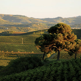 Food & Wine: 3 Italian Wineries that Double as Inns