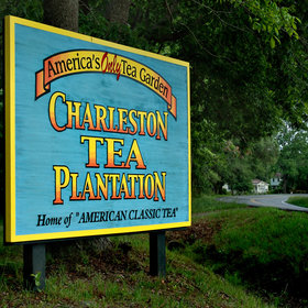 Food & Wine: Inside America's Only Full-Scale Tea Plantation