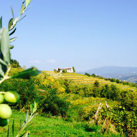 Food & Wine: Friuli Taste Tour