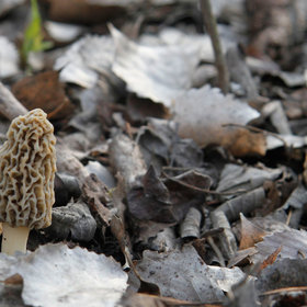 mkgalleryamp; Wine: Armed Mushroom Foragers Prompt Forest Service Crackdown