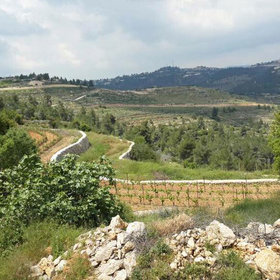 Food & Wine: The Vineyard on the Israeli-Palestinian Border