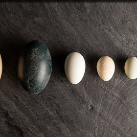 Food & Wine: What We Learned by Deviling Eggs from Seven Different Birds