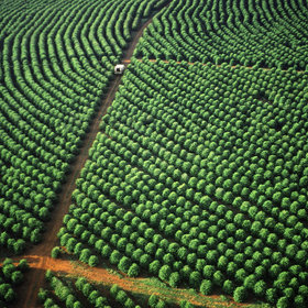 Food & Wine: Starbucks Pledges to Donate 100 Million Healthy Coffee Trees by 2025