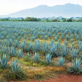 mkgalleryamp; Wine: 10 Terms Every Tequila Drinker Should Know