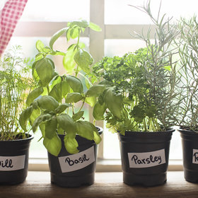Food & Wine: 5 Foods You Can Grow From Scraps at Home
