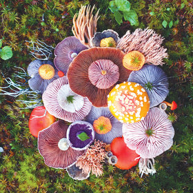 Food & Wine: Wild Mushrooms Become Art in These Gorgeous Photos