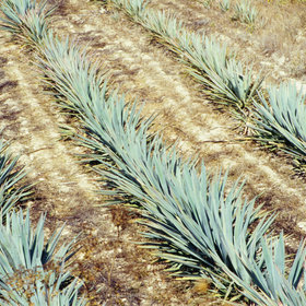 Food & Wine: What You Need to Know About Pulque, Tequila's Delicious Cousin
