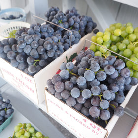 mkgalleryamp; Wine: If You Aren't Eating Grapes From the Finger Lakes, You're Doing It Wrong