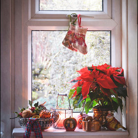 Food & Wine: How to Care for a Christmas Poinsettia