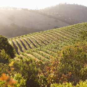 Food & Wine: The Best Appointment-Only Tasting Experiences in Napa and Sonoma Wine Country