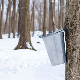 mkgalleryamp; Wine: This Maple Syrup Company Is Letting You Adopt Your Own Maple Tree