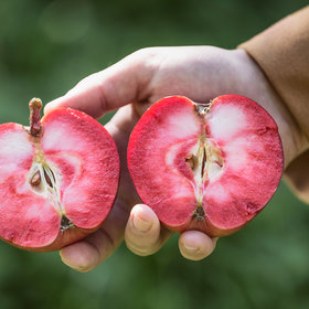 Food & Wine: The Year of Rosé Cider Is Upon Us